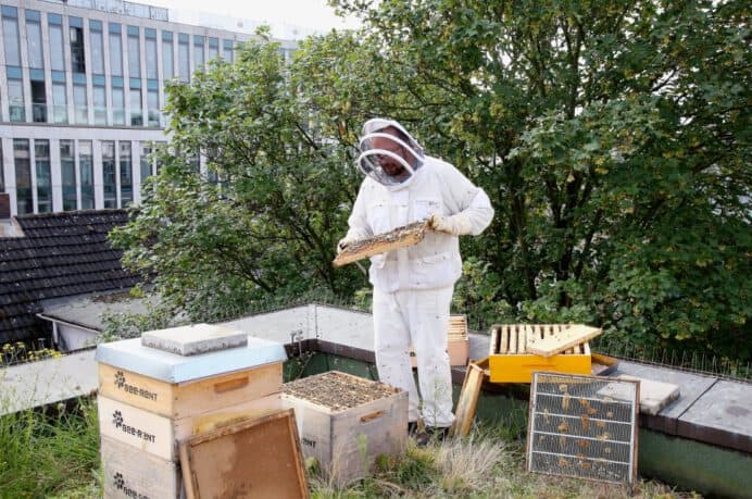 Der Imker (und die Bienen) bei der Arbeit